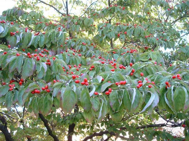 tree-in-yard
